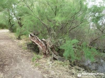 Tablas de Daimiel - Senderismo básico;madera tejo;senderismo en la comunidad de madrid